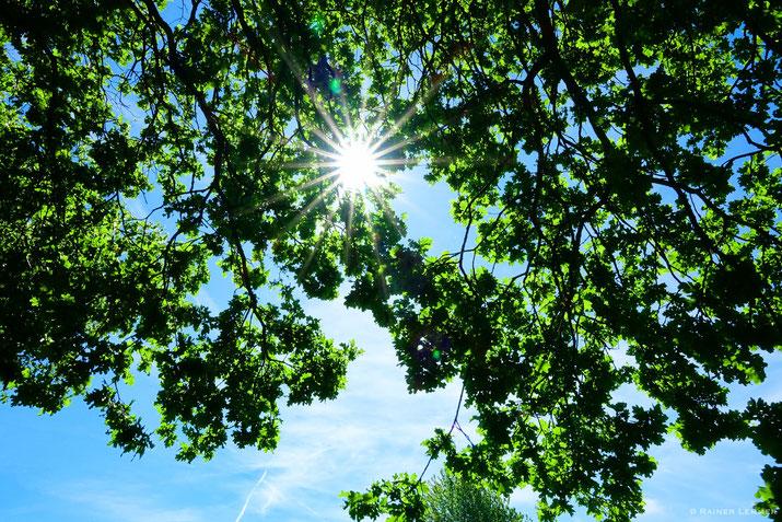 Strahle-Sonne im Eichenwald