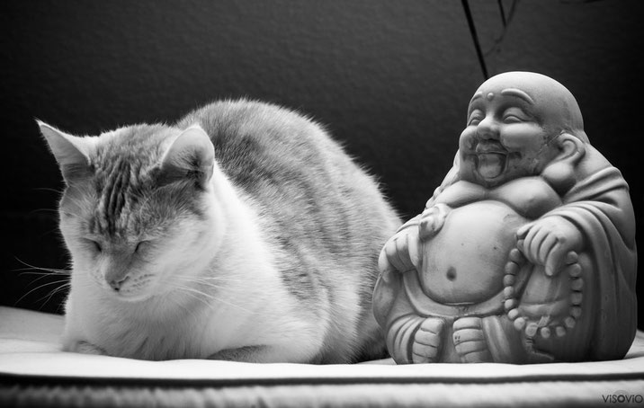 Buddha-Kater 5 | visovio 012015