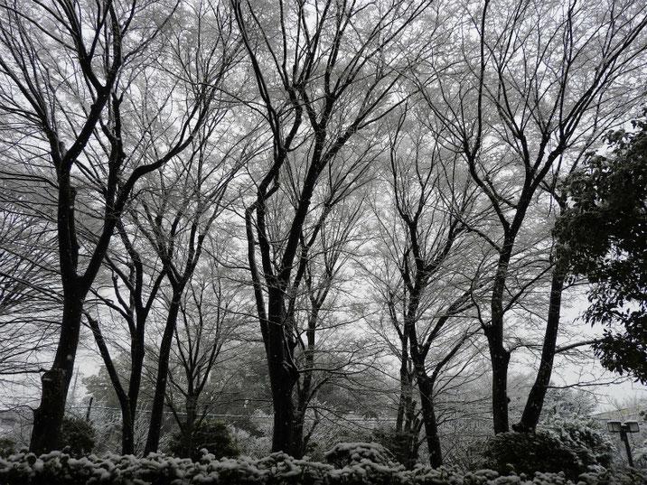 夜の雪景色 自宅 180123撮影