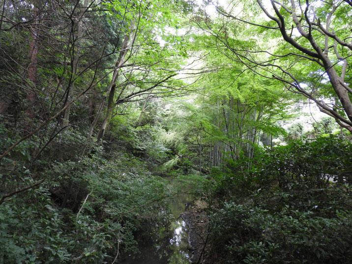 親水緑道の沢の風景 2018/07/14撮影