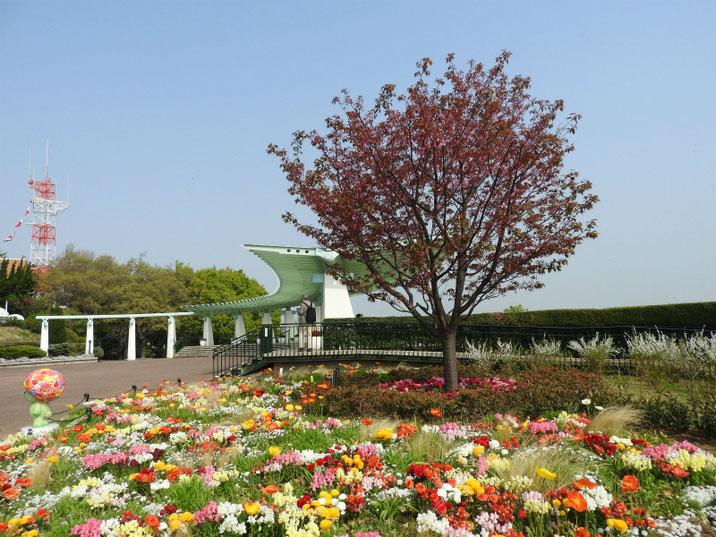 港の見える丘公園 花と展望台 180403撮影