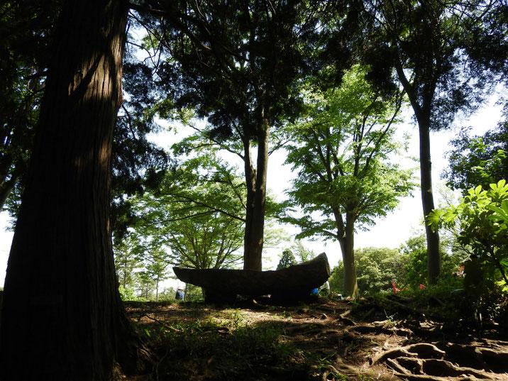 子供自然公園・森林歩道 2018/05/05