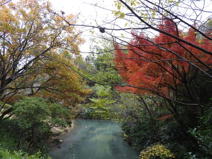秋の親水公園池の紅葉 2017/11/27撮影