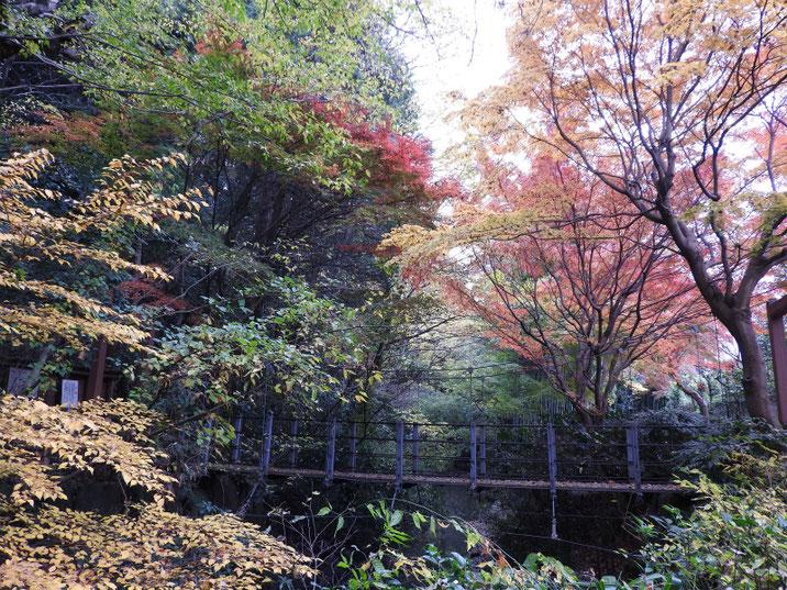 親水緑道の吊り橋 2017/12/01撮影