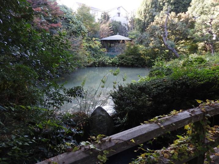 秋の親水公園池 2017/11/09撮影