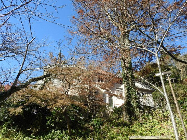 鎌倉 浄妙寺 石窯ガーデンテラス 171216撮影