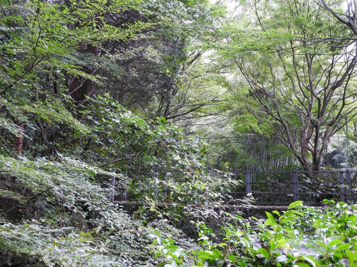 親水緑道の吊り橋 2018/10/15撮影