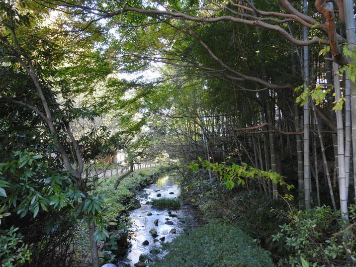 秋の親水緑道 2017/11/25撮影