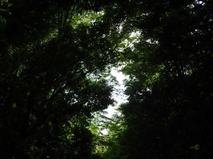 8月の空 親水緑道 12019/08/05撮影