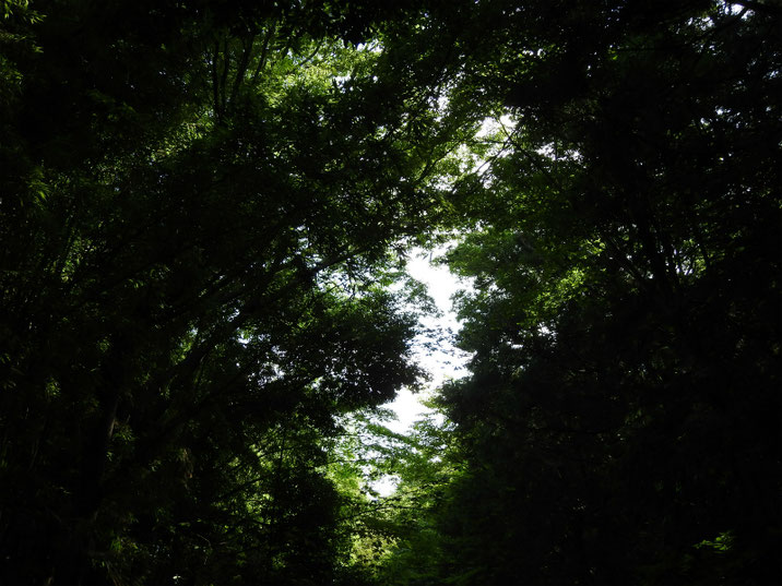 8月の空 親水緑道 2019/08/05撮影