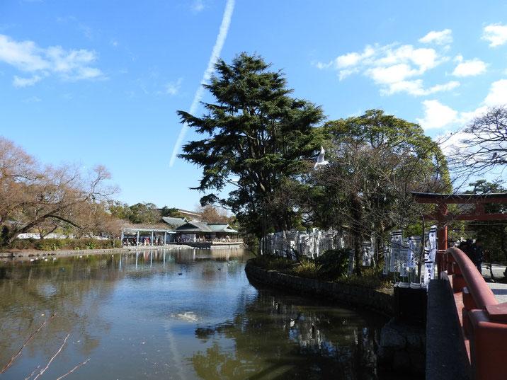鎌倉鶴岡八幡宮源氏池の冬 170111撮影