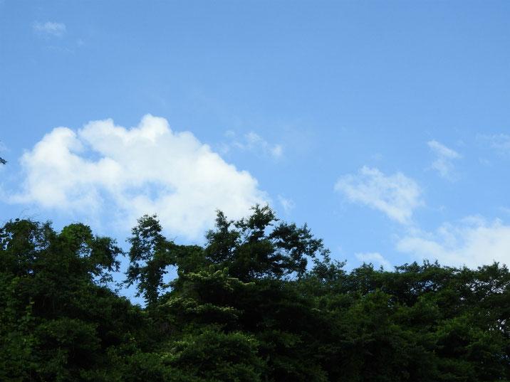 散策路の夏はじまる 170605撮影