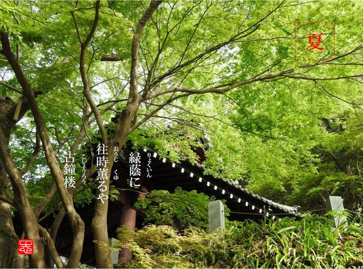 緑蔭に往時薫ゆるや古鐘楼  古鐘楼(こしょうろう)鎌倉妙本寺 160716撮影