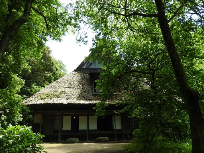 三溪園 矢箆原家合掌造りの夏 160617撮影