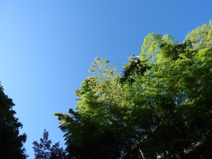初夏の空 親水緑道 2019/0616撮影