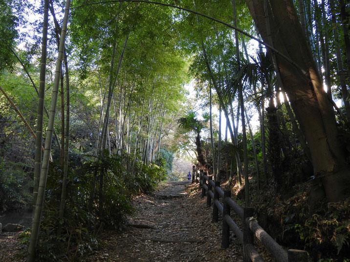 秋の親水緑道 2017/11/21撮影