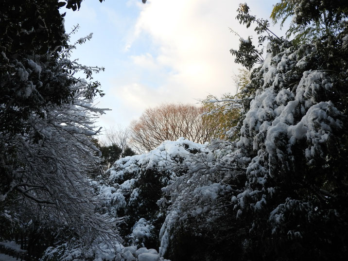 雪景色 親水緑道 180123撮影