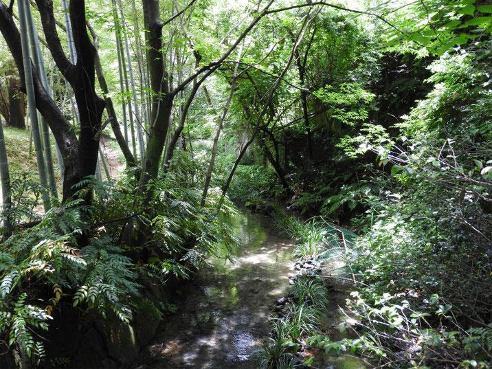 親水緑道の沢の風景 2018/06/07撮影