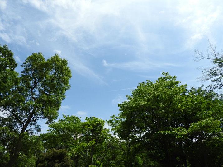 夏のきざし 散策路 2019/06/05撮影