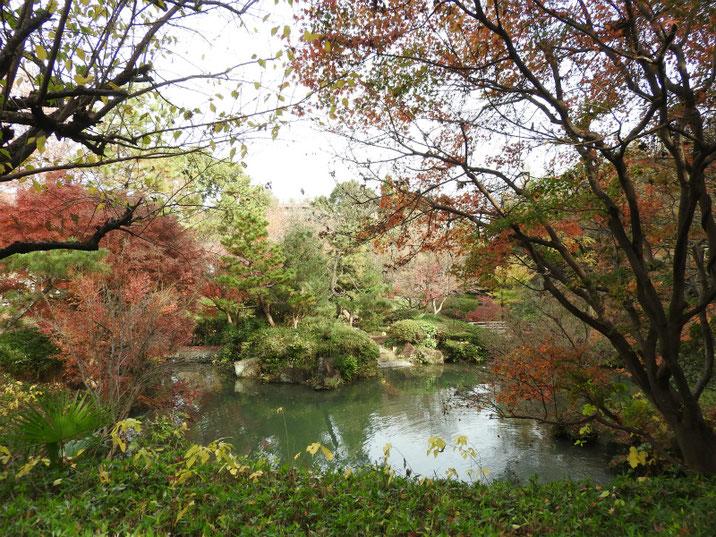 紅葉と池 親水公園 2018/12/07撮影