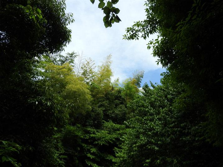 親水緑道から新緑の空 2018/06/07撮影