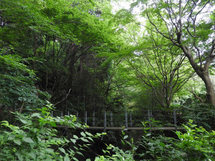 新緑の吊り端 親水緑道 2019/06/22撮影