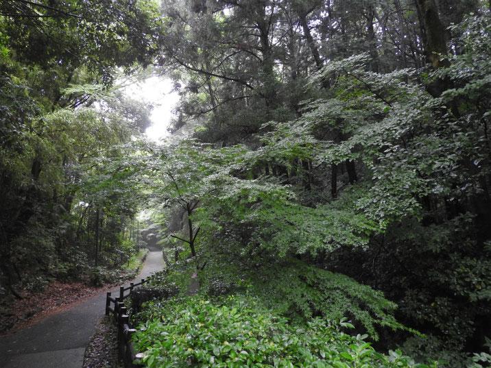 親水緑道 2018/06/21撮影
