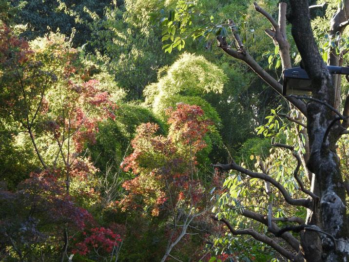 秋の親水公園遊歩道の紅葉 2017/11/09撮影