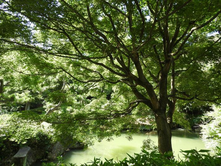 池の畔 親水公園池 2018/08/18撮影