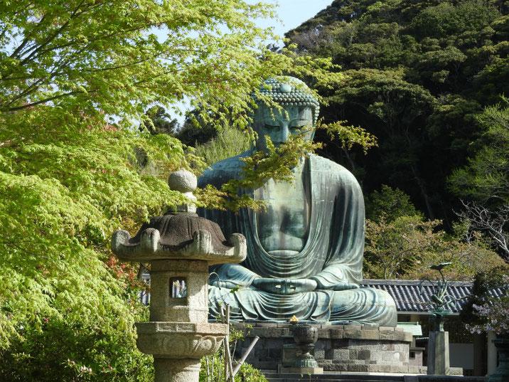 鎌倉高徳院 春の大仏様 160415撮影