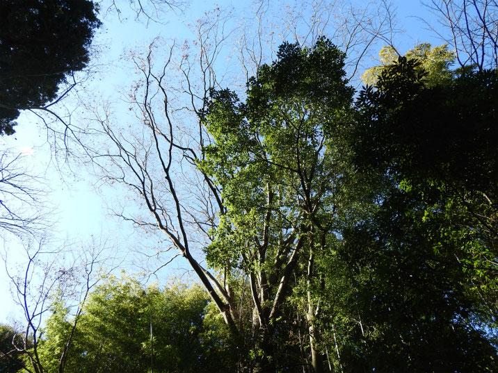 冬の風景 木立 親水公園 2019/01/19撮影