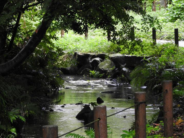 新緑道沢の風景 2018/09/30撮影