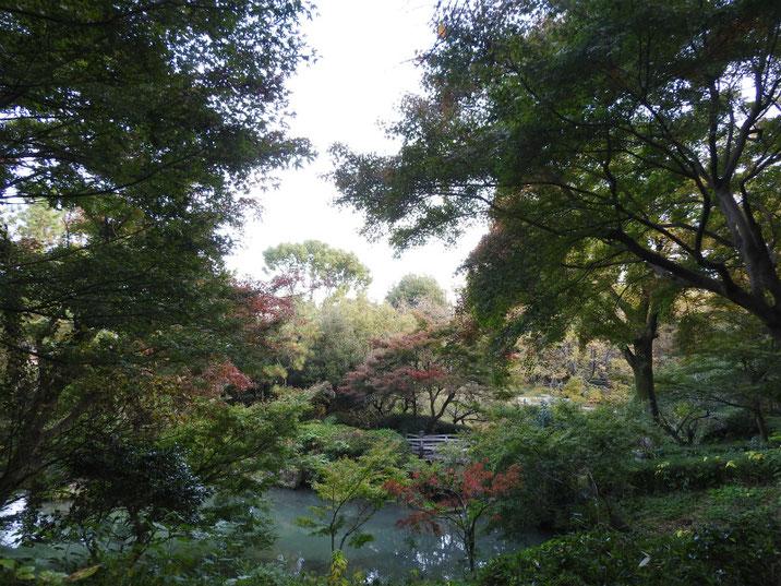 秋の親水公園池 2018/11/24撮影