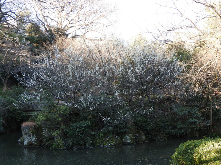 散策路公園 梅と池 2019/0308撮影