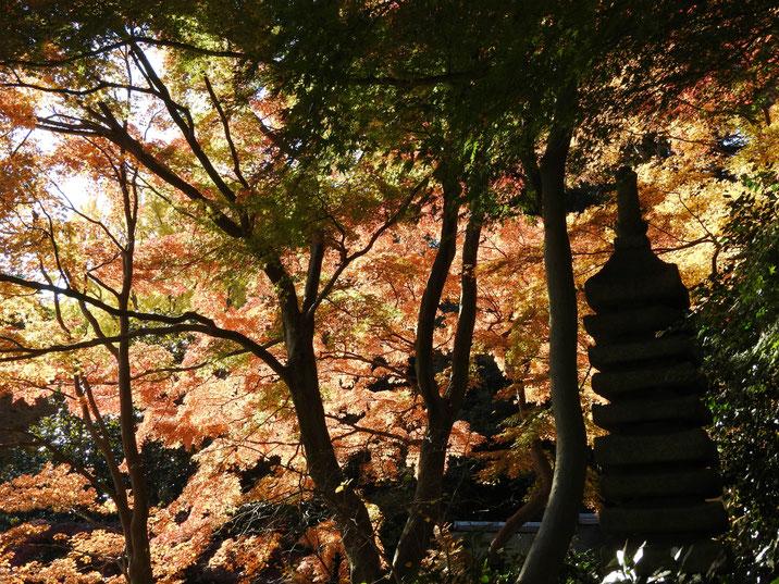 三溪園 冬の庭 161202撮影