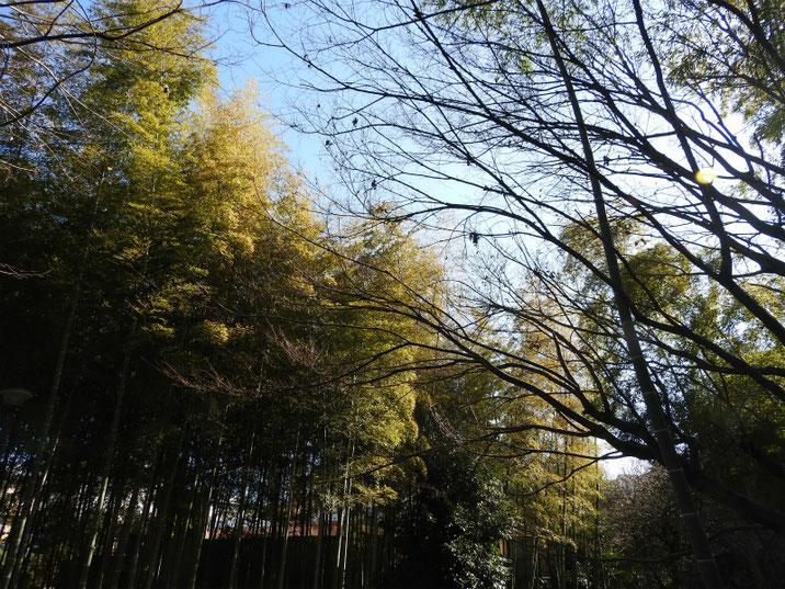 冬の道 親水緑道の竹林 2019/02/18撮影
