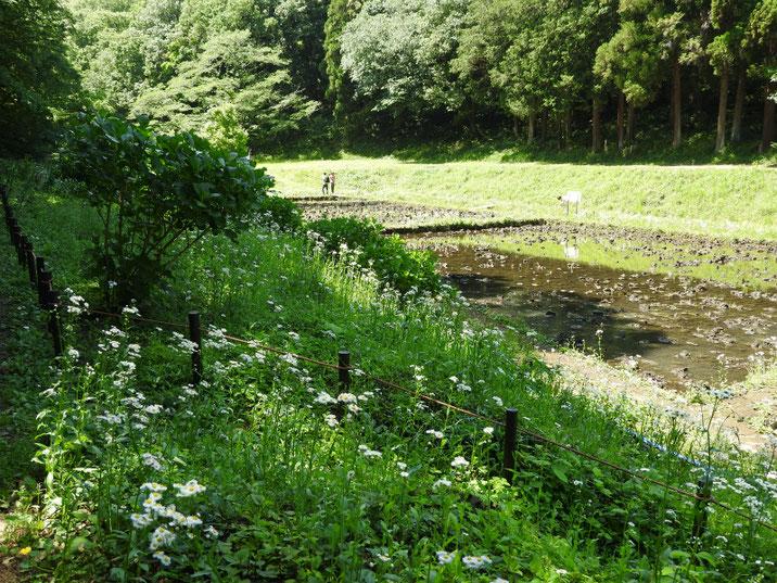 子供自然公園・教育水田 2018/05/05