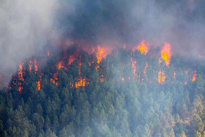 Massiv steigende Waldbrandgefahr in Nadelforsten © S. Ecker