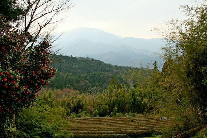 Camélias, champs de thé, bambous... et au loin la tête encore enneigée du Mont Ena (恵那山)