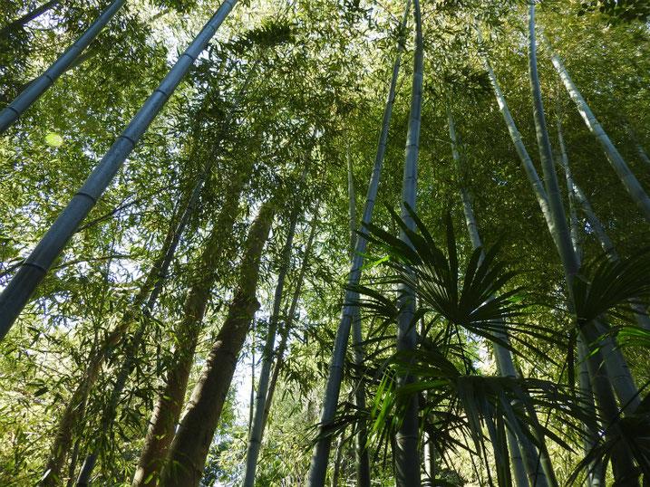親水緑道の竹林 2021/04/11撮影