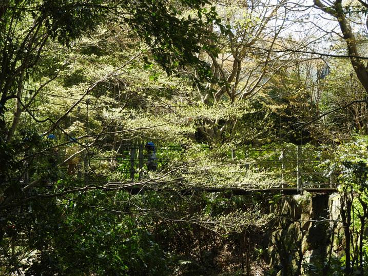 3月の親水緑道の吊り橋 2020/03/26撮影