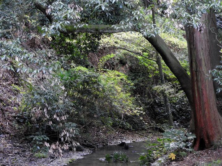 親水緑道の沢の風景 2020/11/09撮影