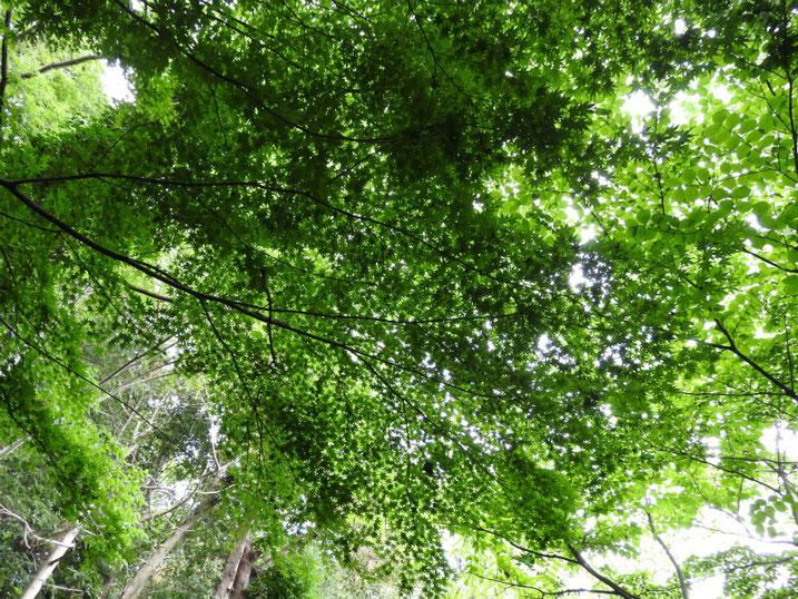 親水緑道の新緑 2021/05/12撮影