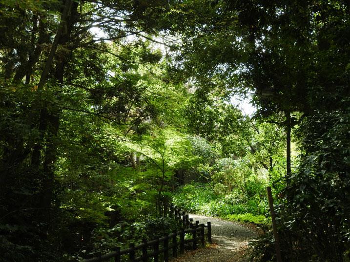 親水緑道 2020/11/09撮影