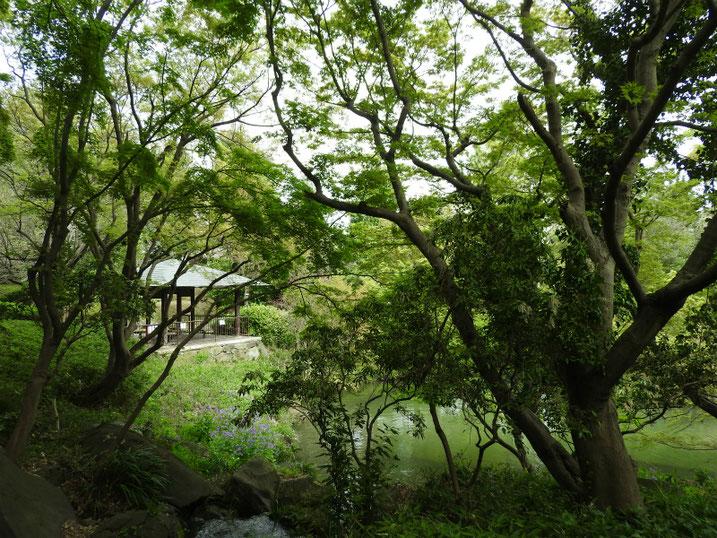 4月の親水公園、池の風景 2020/04/05撮影