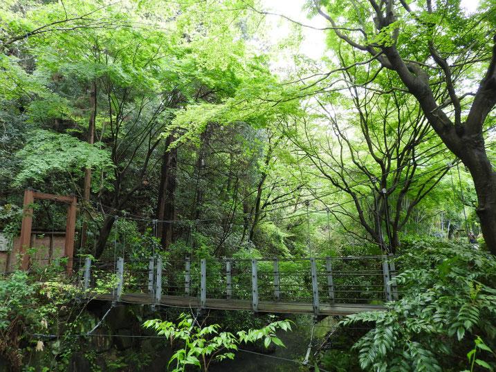 4月の親水緑道の吊り橋 2020/04/21撮影