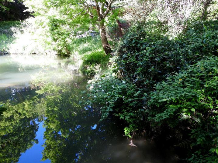 親水公園の池 2021/04/11撮影