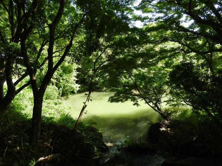 親水公園の池の風景 2020/06/17撮影