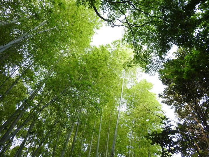 親水緑道の竹林 2021/05/30撮影