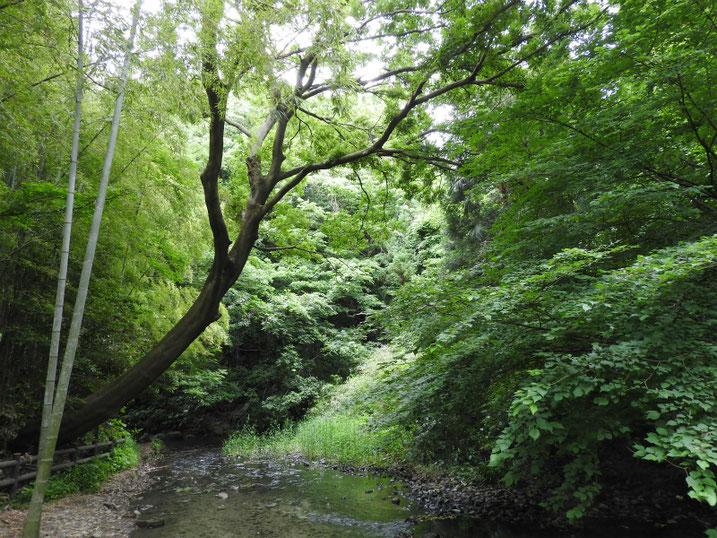 緑道 沢の風景 2020/06/02撮影